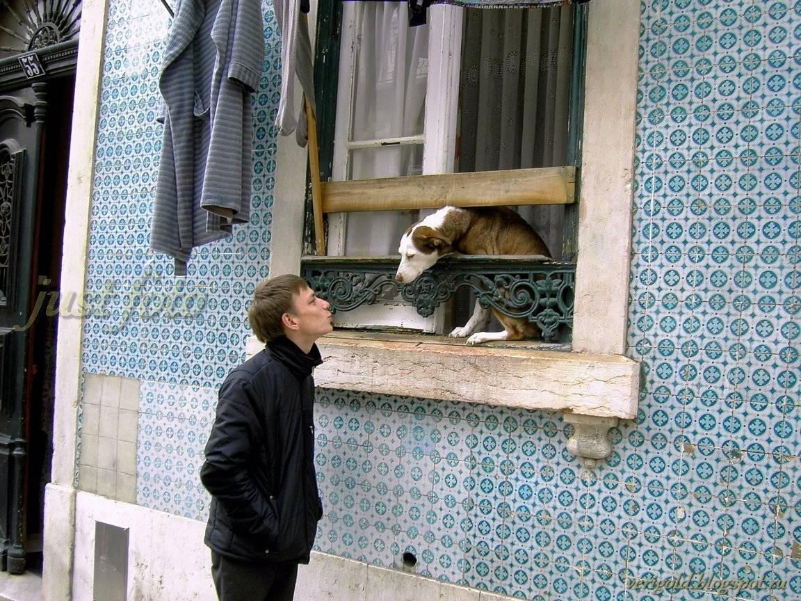 Алфама животные Лиссабон фото