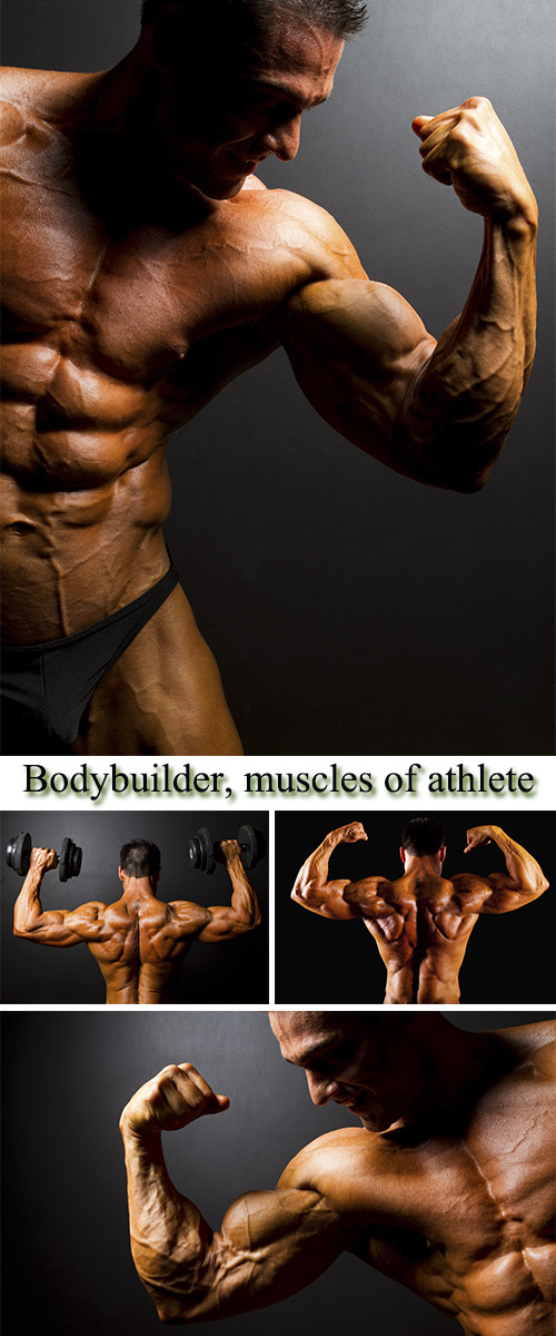 Stock Photo: Bodybuilder, muscles of athlete