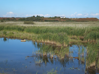 Minsmere - looking towards Coney Hill and the Coastguard Cottages