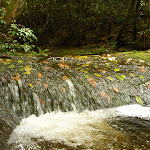 Dora Creek with leaves in the Watagans (321350)
