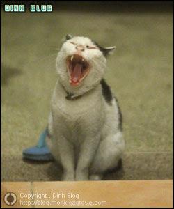 แมวแก่ ฟันหายไปเกือบหมดปาก