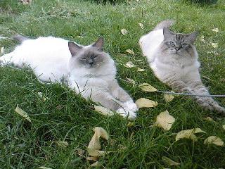Faya et Finwë