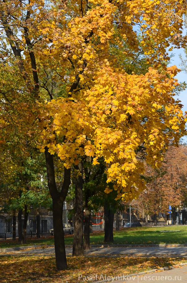 Донецкая осень