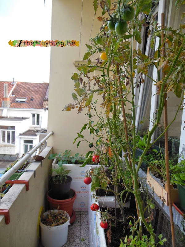 Balcony Garden September 2014