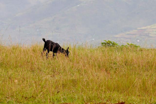 Africa2011  افريقيا IMG_0042