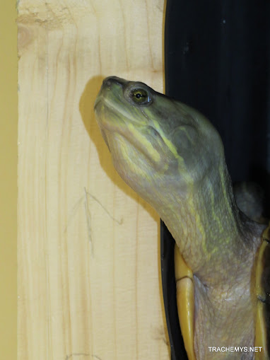 mes tortues (BK) - Page 10 IMG_2146