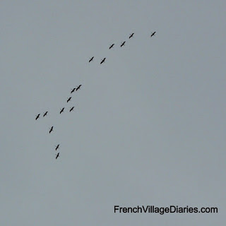 French Village Diaries migrating cranes poitou-charentes
