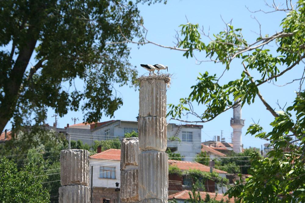 храм Аполлона, аисты