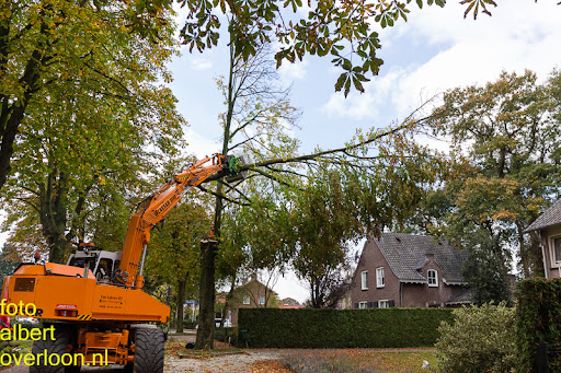 Bomen gekapt Museumlaan in overloon 20-10-2014 (19).jpg