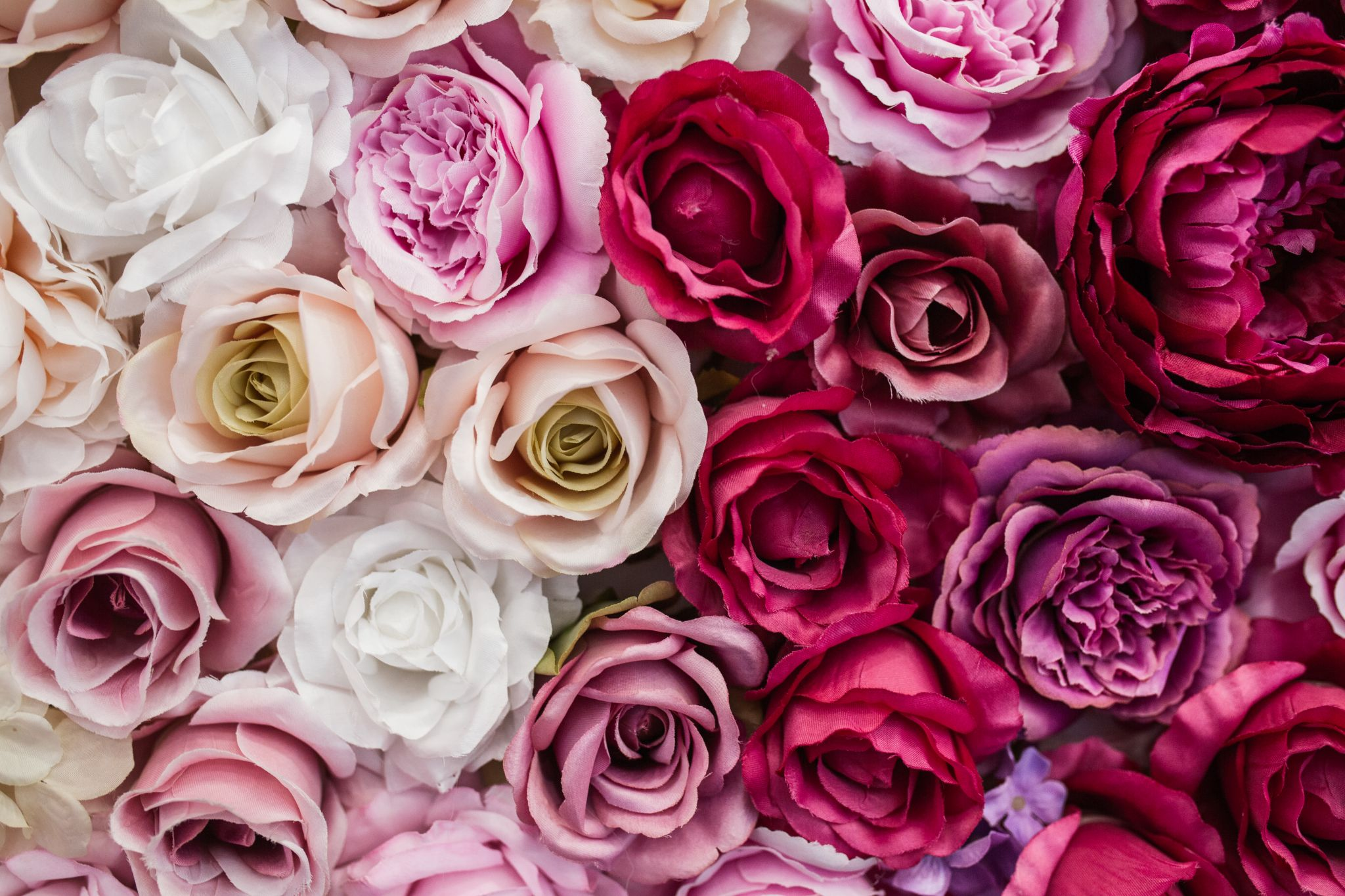 Une photo illustrative de plusieurs espèces de roses.