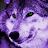 gray wolf avatar image