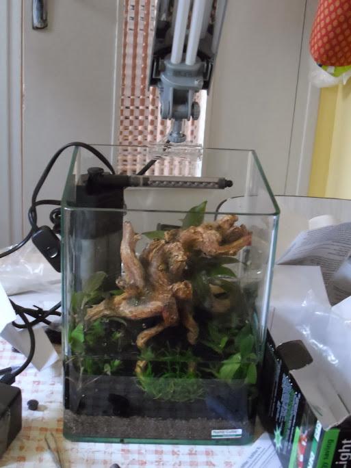 Ma petit histoire Aquariophile de 2009 à aujourd'hui  039