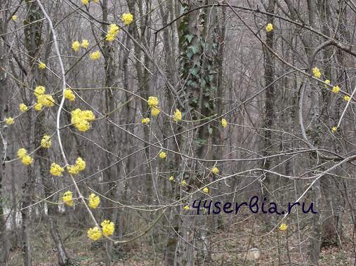 Весна Сокобаня