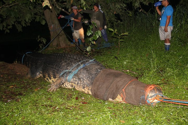 Lolong of Agusan is the world's largest crocodile