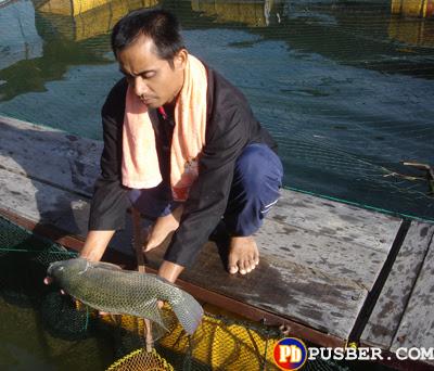 Cara Ternak Ikan Lele Kolam Tanah