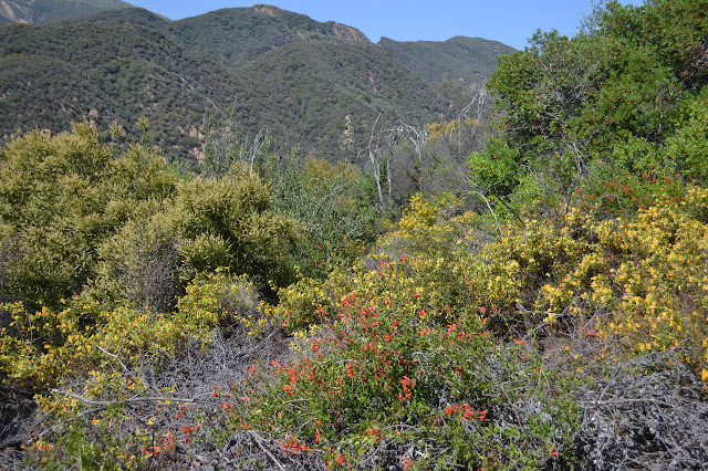 multitude of wildflowers along the trail