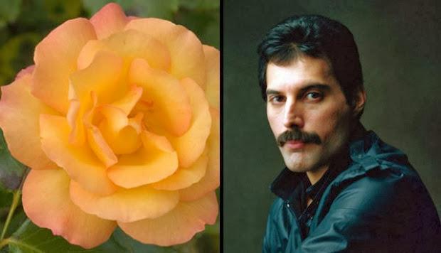 bunga mawar artis