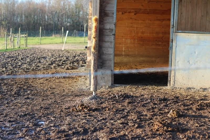 Aménagement de mon paddock hors boue. Solution trouvée pour cet hiver !! IMG_9959