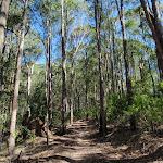 Glasson's Trail (237800)