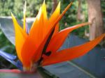Flowers - Close Ups