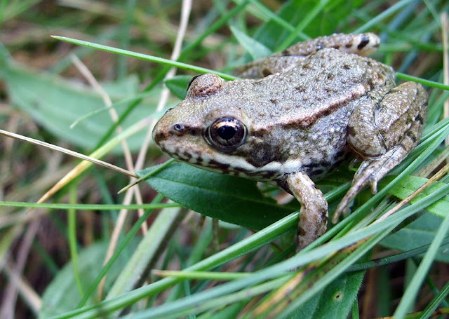 grenouille - Page 4 S5007387