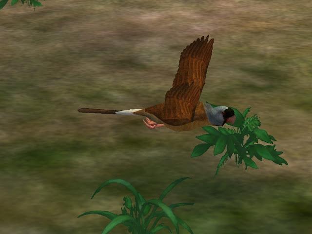 Loro de las Mascareñas / Mascarene Parrot Pic1
