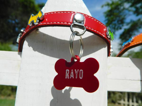 dog collar and tags