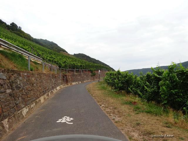 passeando - Passeando pela Suíça - 2012 - Página 21 DSC08557
