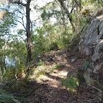 Ferny hill side beside Cowan Creek (419878)