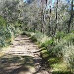 Trail beside Snowgums lift (275951)