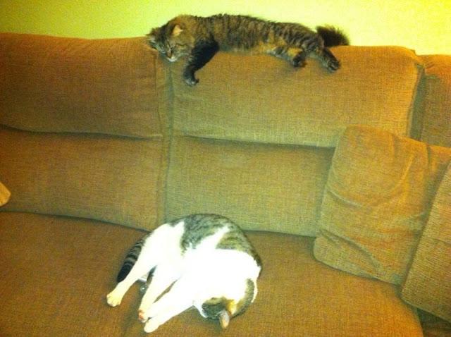 Gatita  x bosque noruega y tato felino necesitan casa urgentemente,novedades primer post. ¡ADOPTADOS! - Página 2 IMG_1753