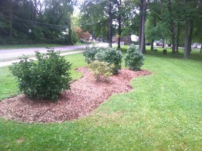 Corbett Park 2012 Lilac beds