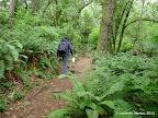 Dipsea Trail
