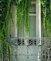 green vines window.πρότυπο παράθυρο.
