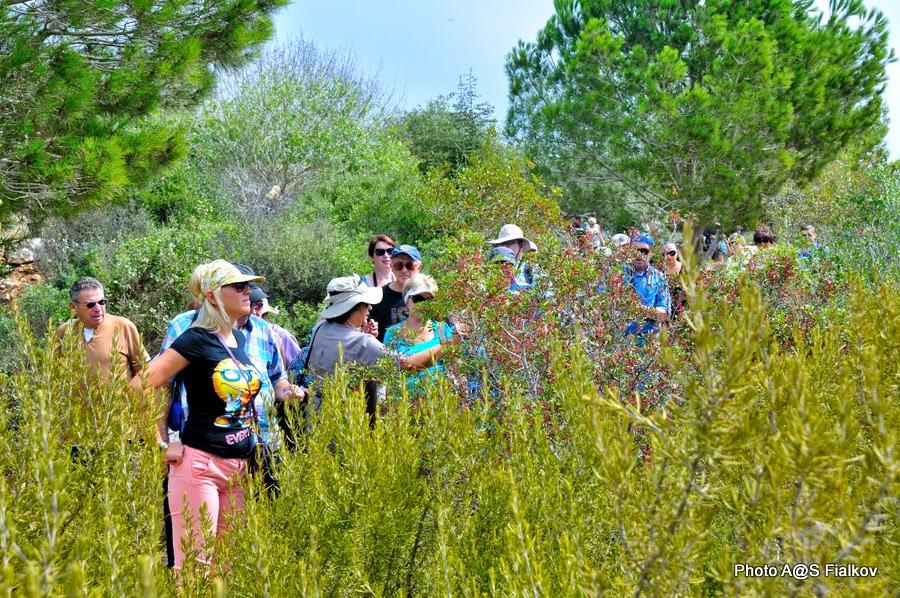 Урок ботаники. Национальный парк Адмит. Экскурсия по Западной Галилее. Гид в Израиле Светлана Фиалкова.