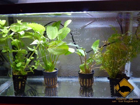 Como transplantar plantas en un acuario desde la maceta casa dise o - La casa de la maceta ...