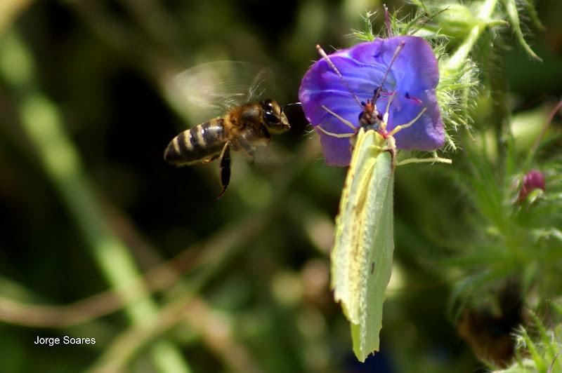 A abelha e a borboleta, encontros