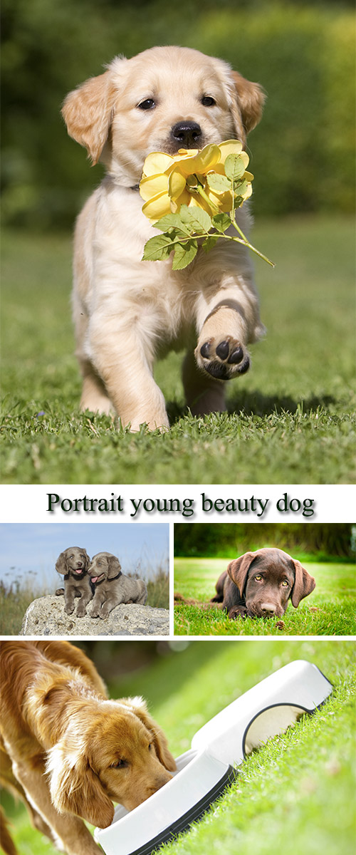 Stock Photo: Portrait young beauty dog