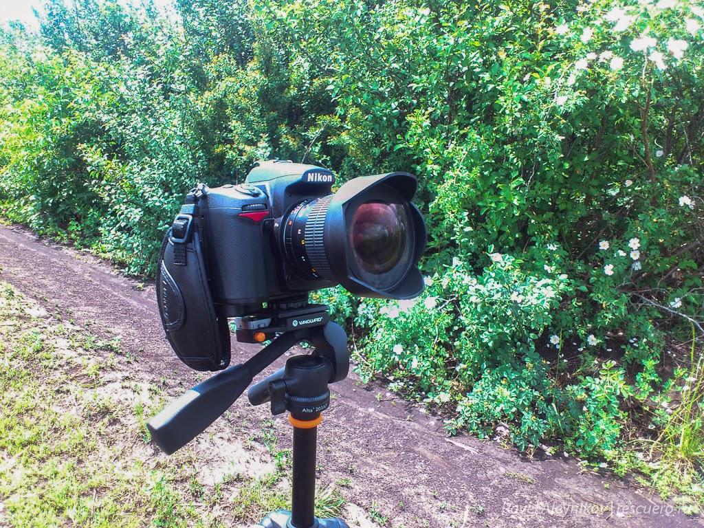 Nikon D7000 + Samyang f/2.8 14mm