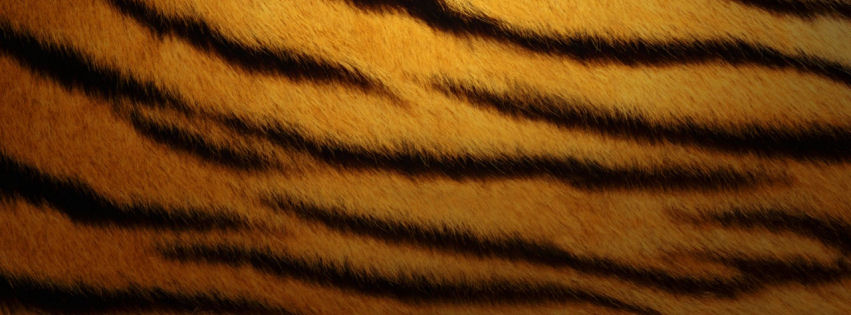 Tiger skin facebook cover