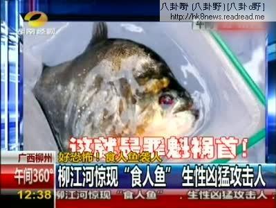 廣西食人魚