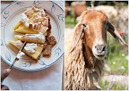 Thumbnail image for The cheese trail- touring Israel, one goat farm at a time