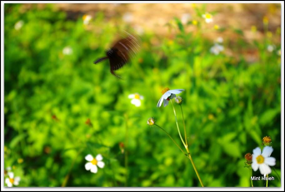 蝴蝶飛了@清水巖(圖9枚)