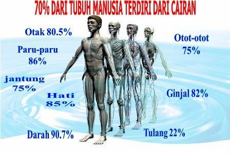 komposisi air tubuh manusia