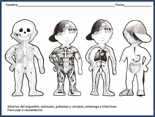 Silueta del cuerpo humano para colorear - Imagui