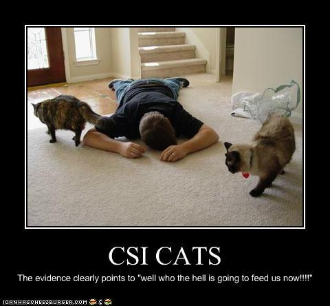 photo of two cats circling someone laying on the ground: CSI cats