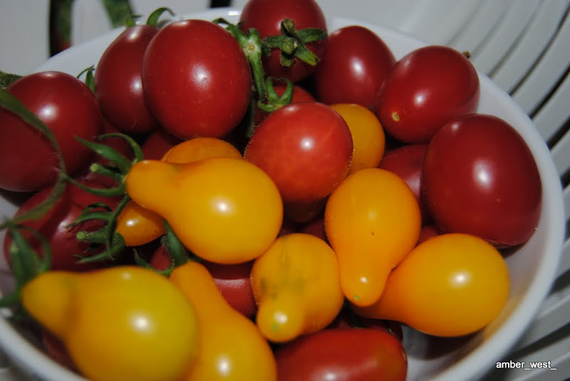 Some of last year's (2010) tomato harvest