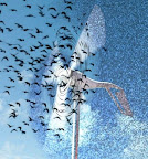 Bird Blenders: Birdwatchers see rare swift killed by wind turbine