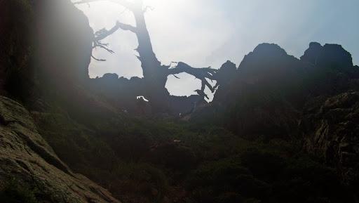 L'un des deux cols avec pins de la traversée en haut de la falaise