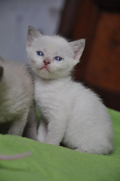 1 er Thème : Quand votre/vos chats étaient chatons B%25C3%25A9b%25C3%25A9s%25204%2520semaine%2520028